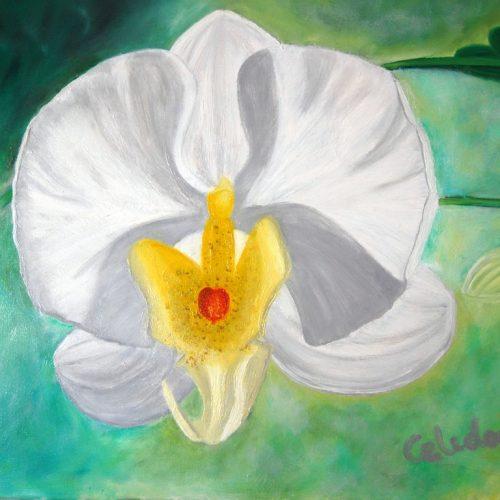 cuadros de orquídeas 089
