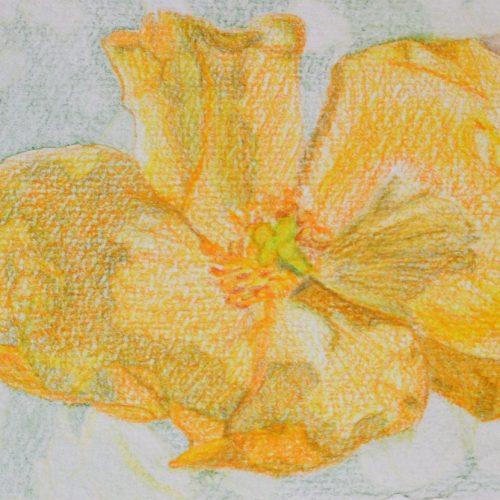 flores pintadas con acuarela 53